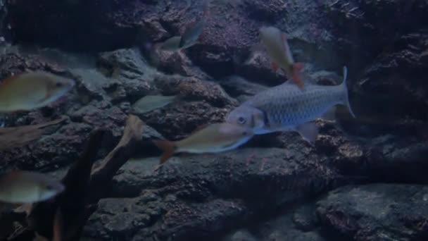 Szép halak az akváriumban. A hal tartály hal.