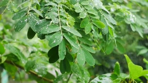 Wassertropfen auf Baumblatt.