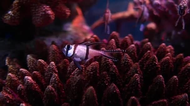 Beautiful Fish Aquarium Decoration Aquatic Plants Background Colorful Fish Fish Stock Video C Ducksmall 315469068
