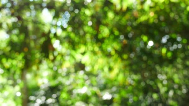 zelené bokeh abstraktní pozadí, přírodní zelená rozmazané pozadí