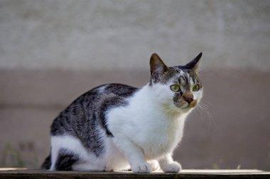 Cute alert cat sitting on garden table