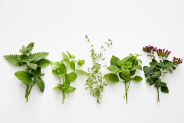 Assortment of fresh herbs on white background