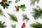 Fotografie Sammlung von Zierpflanzen Weihnachten mit grünen Blättern und Beeren der Stechpalme