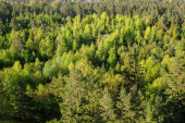 Pohled shora na jarní les