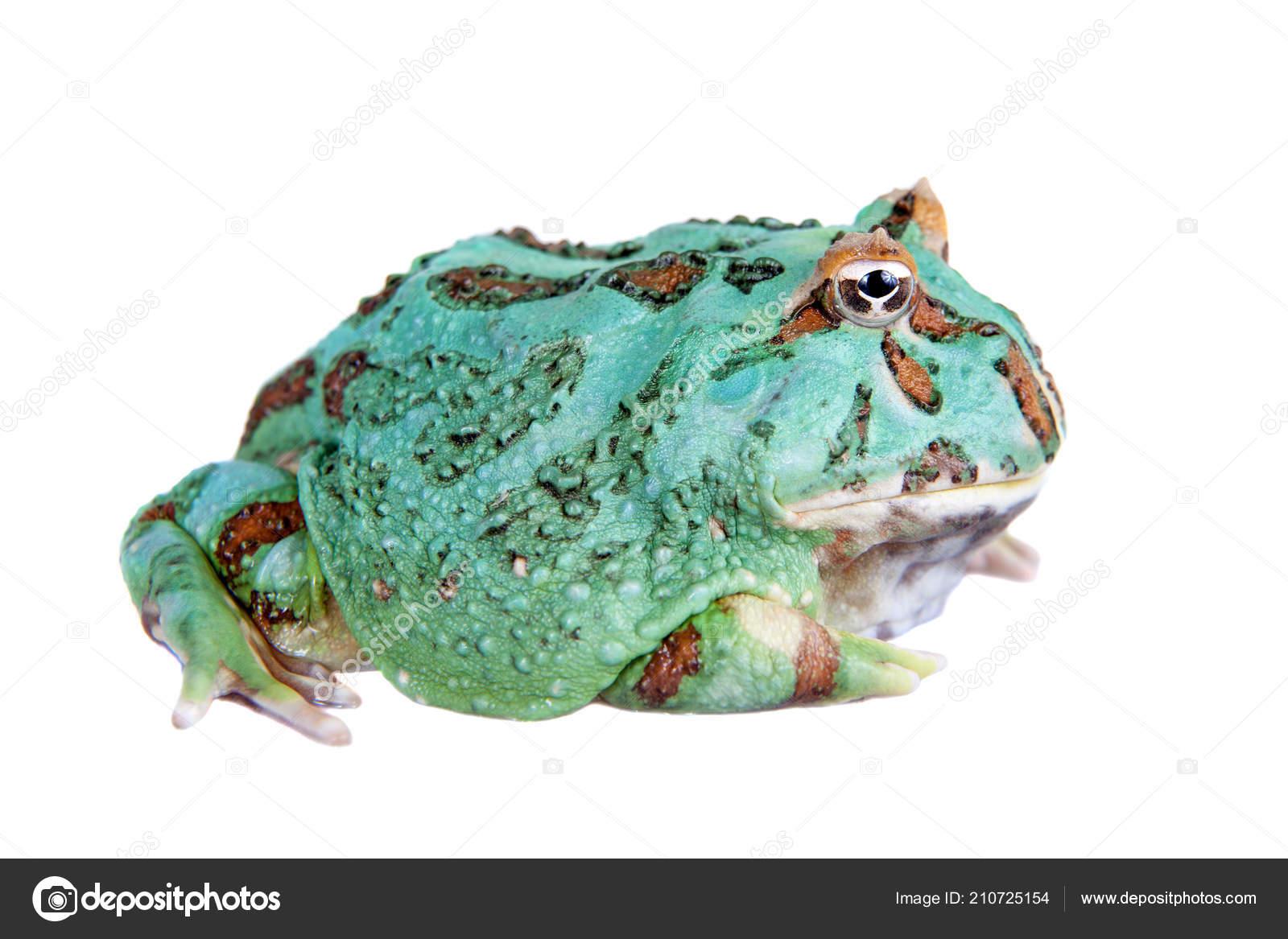 Samurai Frog Stock Photos Royalty Free Samurai Frog Images Depositphotos