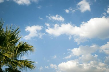 Leaves of a palm tree on a cloudy and blue sky.