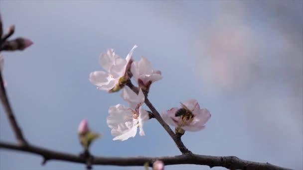 Strom květiny kvetoucí zblízka záběr s včela.
