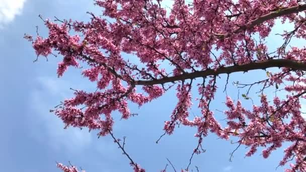 Blossoming flowers on a blue sky background and with a few bees flying on them. Slow motion footage.
