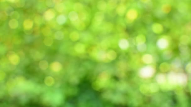 Abstraktní rozmazané z ohniskového pozadí, přirozené světlo přírodního lesa, pulzující zelená bokeh