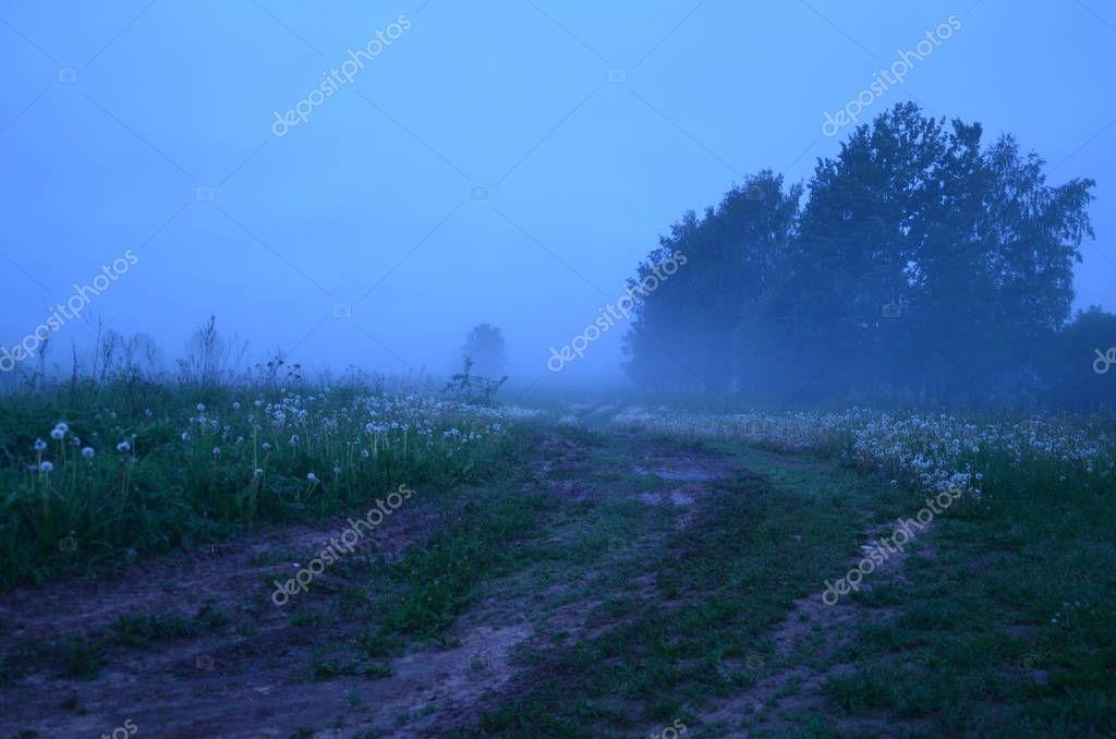 misty morning in the countryside