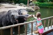 Fotografie Familie Fütterung der Elefanten im Zoo. Kinder ernähren sich Asiatische Elefanten in tropischen Safari Park während der Sommerferien in Singapur. Kinder beobachten Tiere. Kleine Mädchen, das Obst, wildes Tier