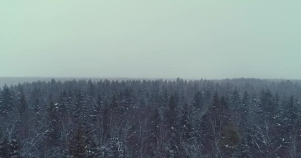 Letecká nadjezdu zmrazené zasněžené smrkovým porostem