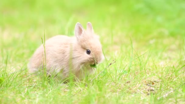 Malý králík na trávě v létě. Malý velikonoční zajíček na louce.