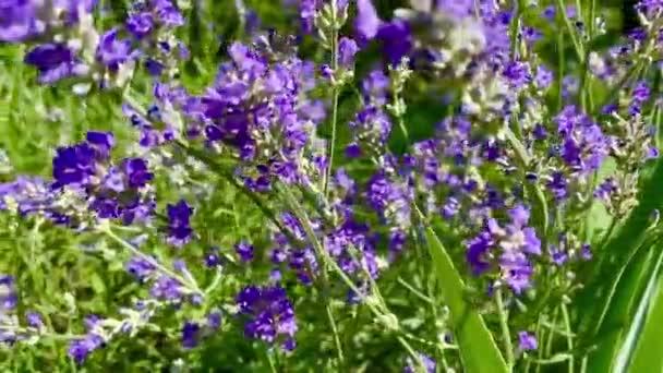 Pole s divokými květy v létě