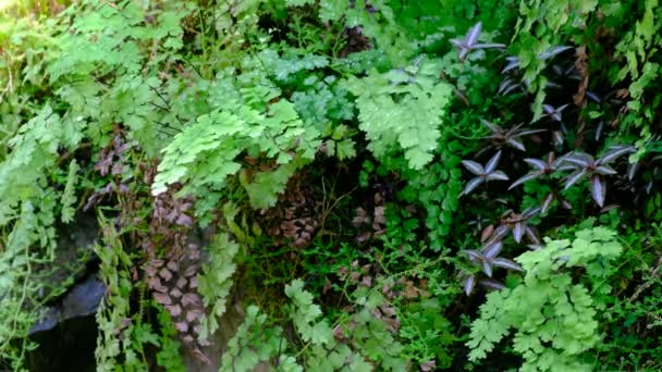 friss zöld páfrány levelek