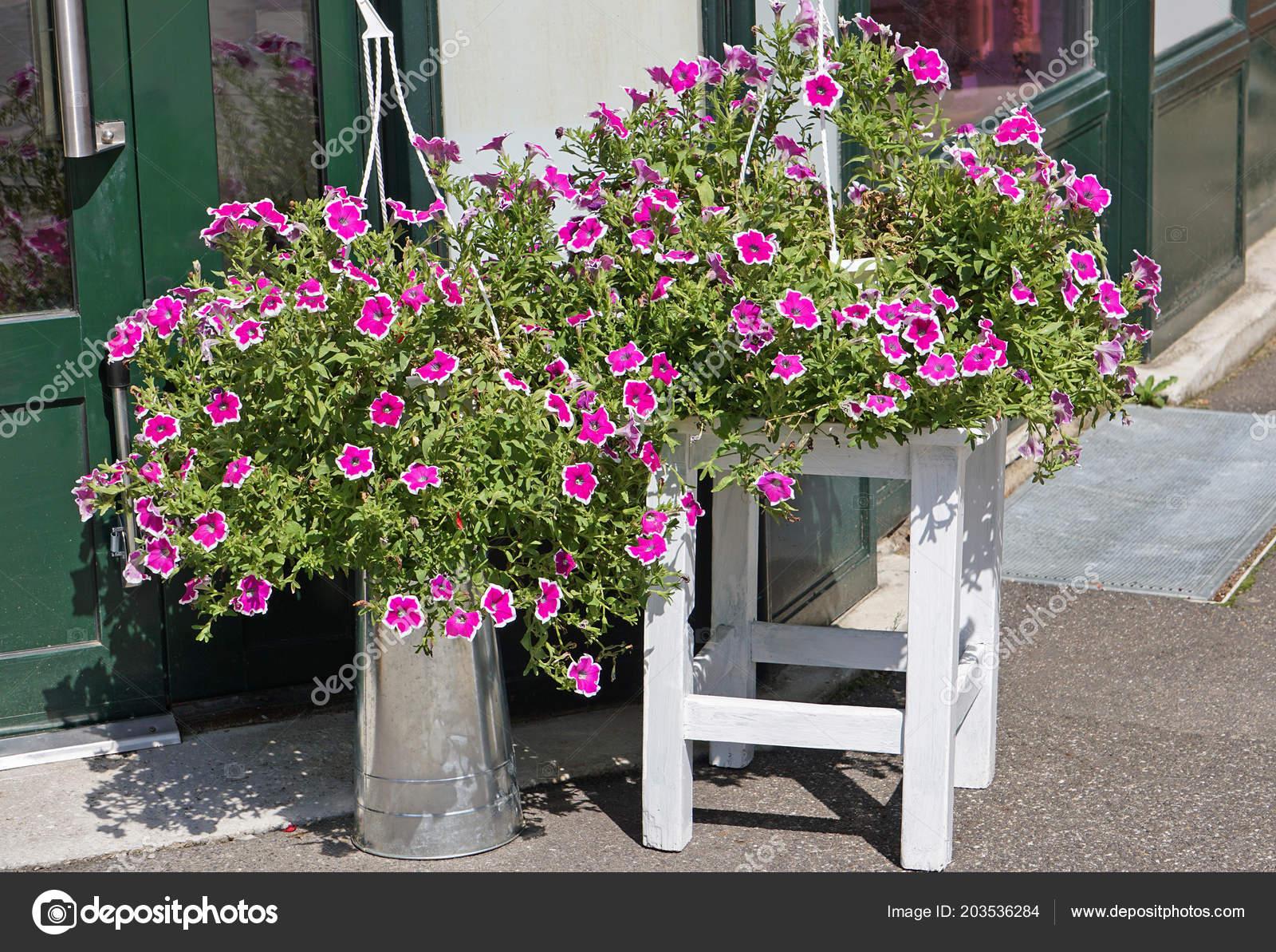 Fiori viola all aperto uno sgabello u foto stock majorosl