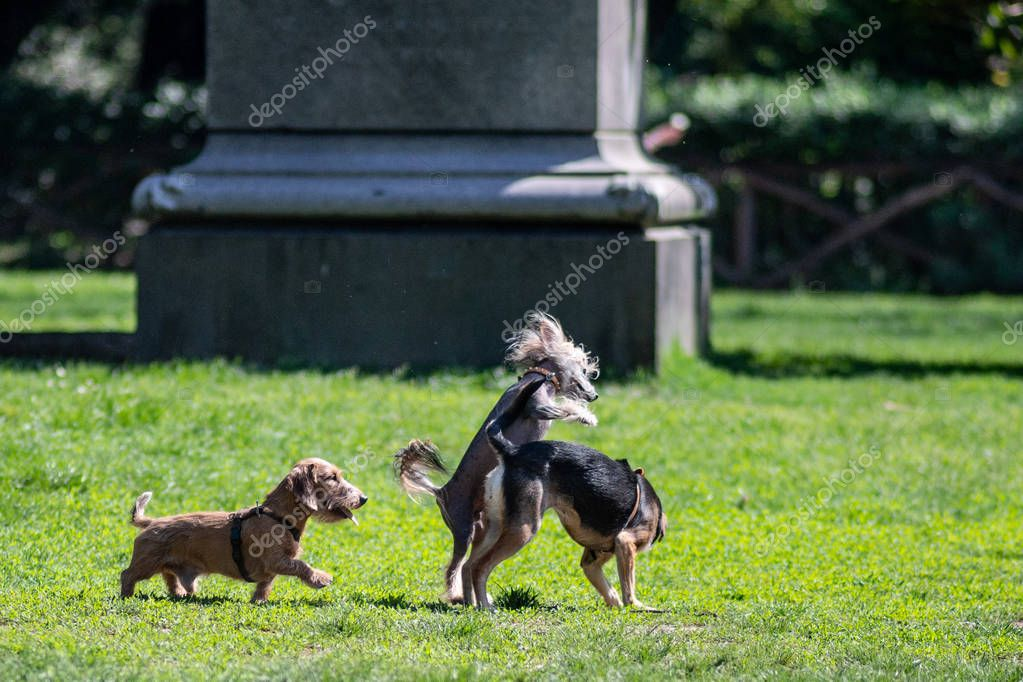 happy Dogs  Playing on the grass in park
