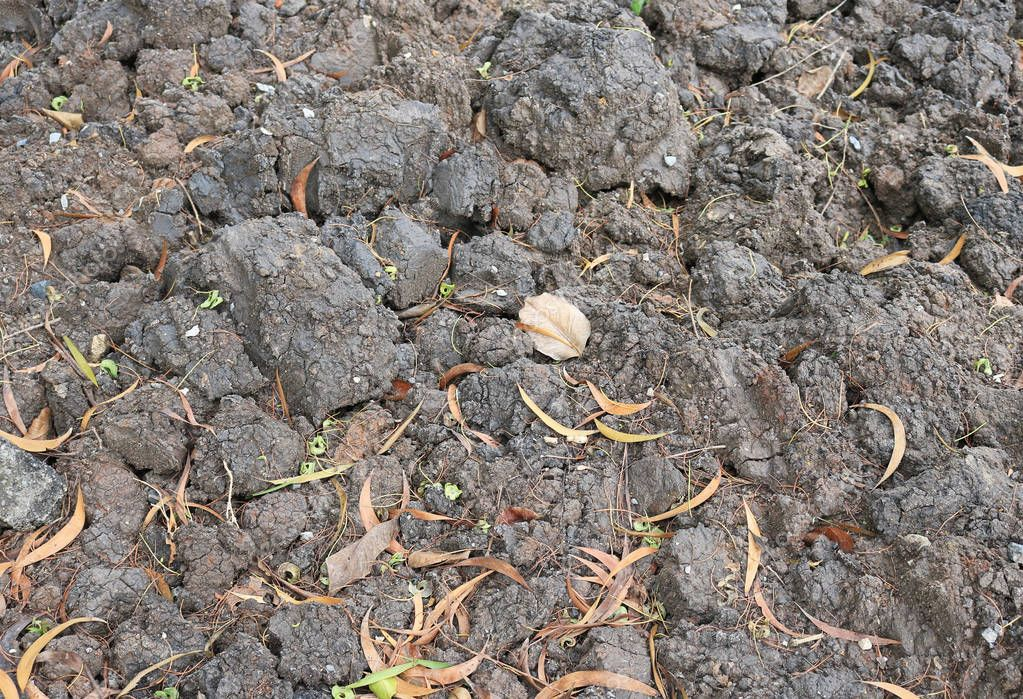 detail organic soil in farm