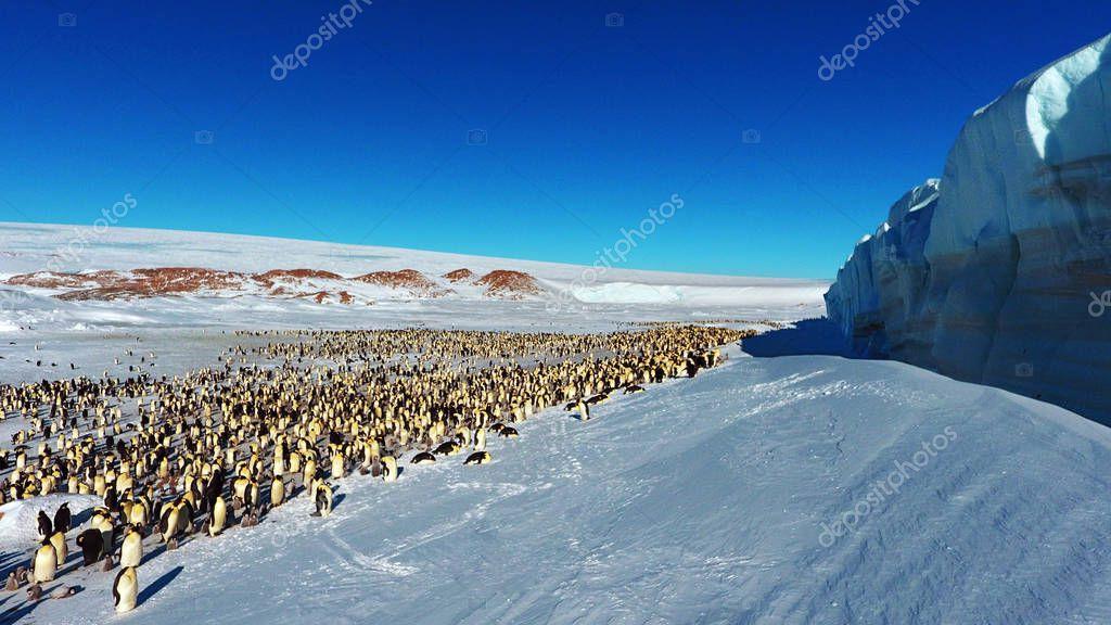 Colony, flock - Emperor Penguins in Antarctica. Overall plan