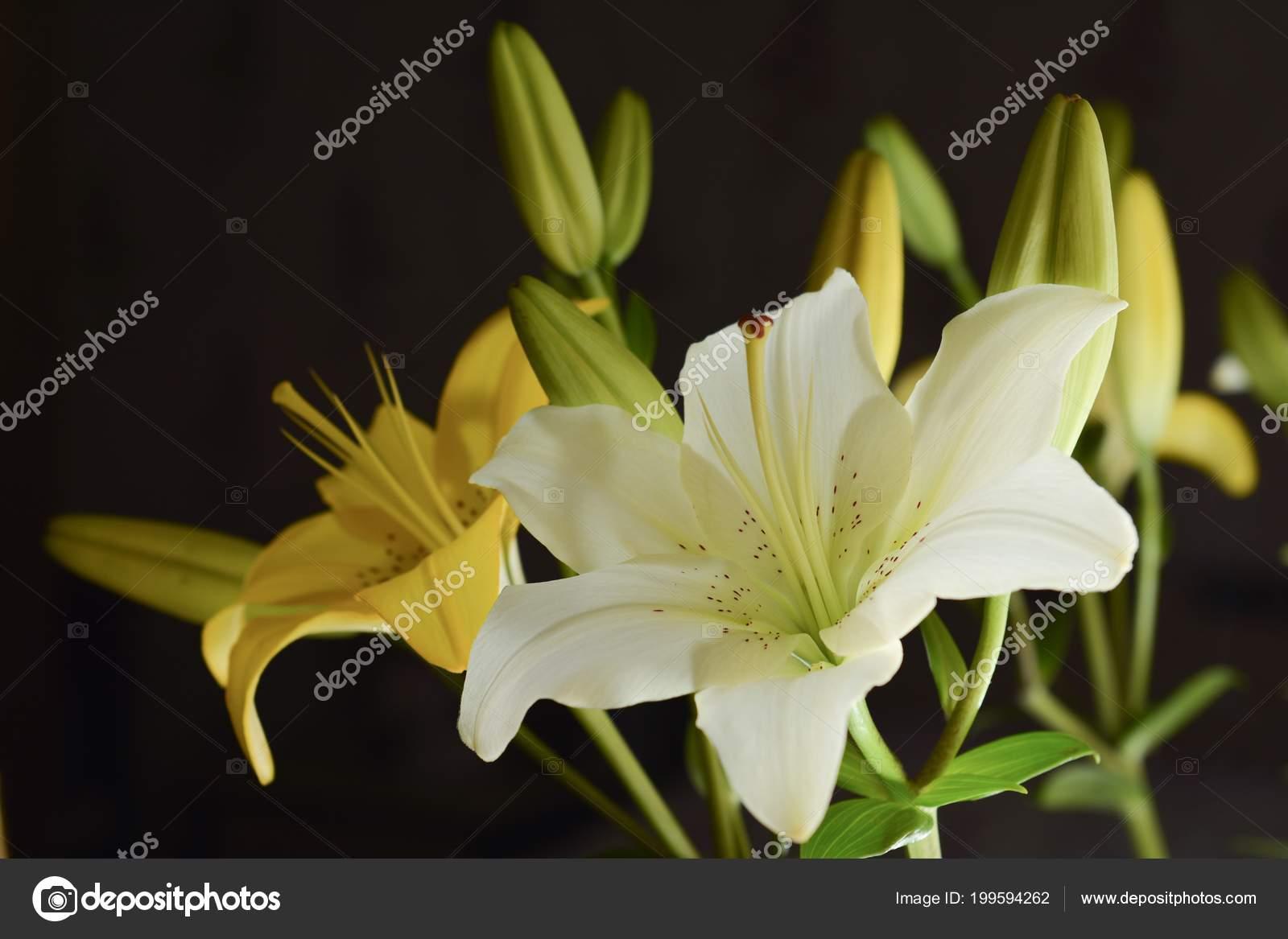 White Lilies Flowers Garden Stock Photo Armastus 199594262