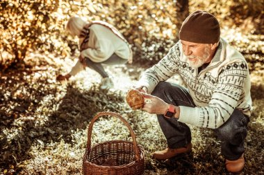 Elderly couple picking mushrooms in the forest.