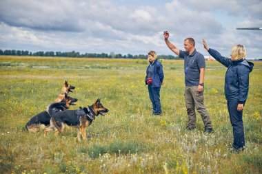 Canine sniffer dogs being trained in grassy field