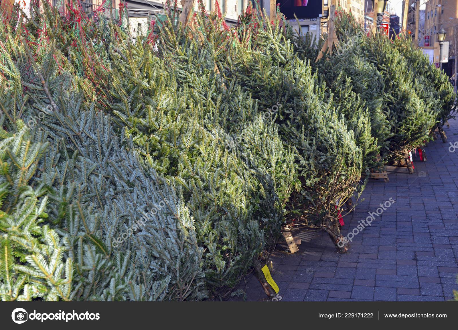 Christmas Trees For Sale.Cut Christmas Trees Sale Street Manhattan New York Stock