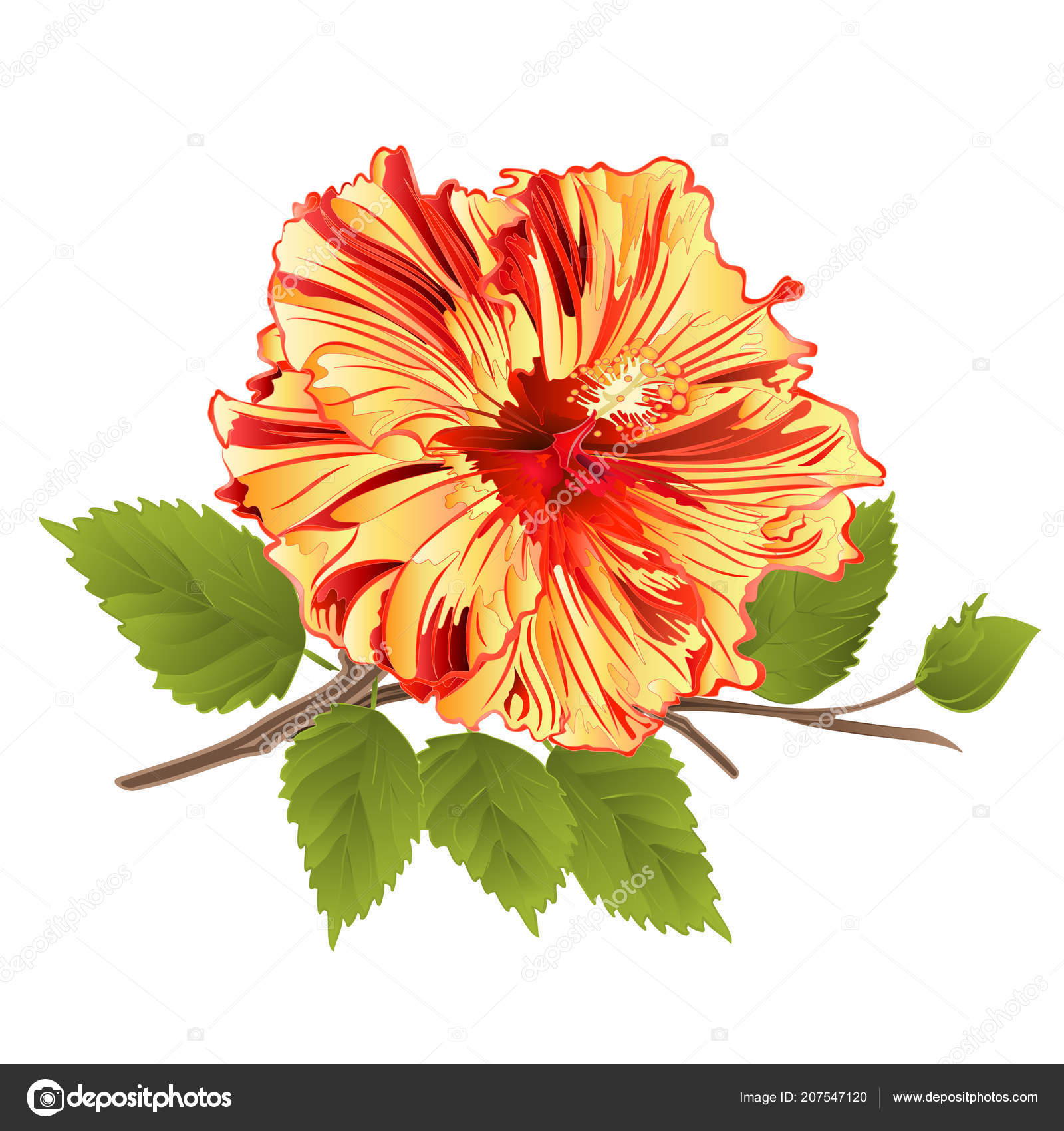 Flower Tropical Plant Yellow Hibiscus White Background Vintage