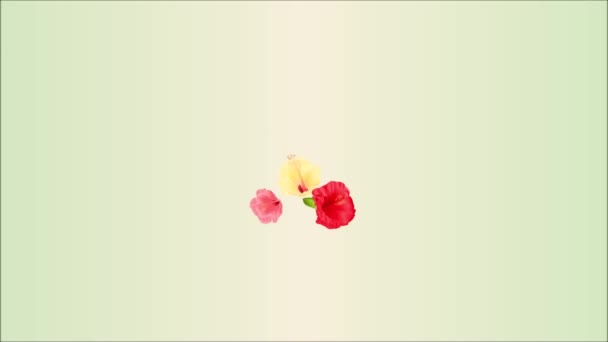 Video seamless loop animation of illustration bouquet with tropical flowers  floral arrangement, with  red pink and yellow hibiscus and white orchid palm,philodendron  vintage motion
