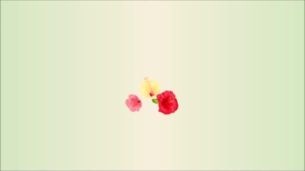 Video bezešvé smyčka animace obrázku kytice s tropické květiny aranžmá, s červenými ibišky růžové a žluté a bílé orchideje palm, filodendron vintage pohybu