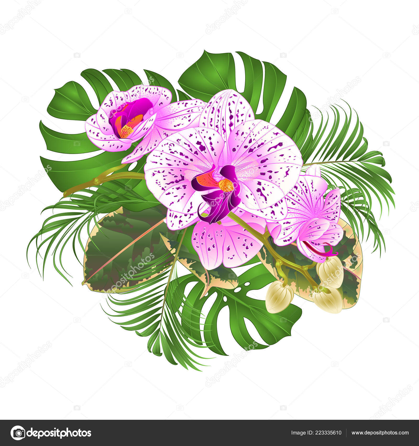 Bouquet Tropical Flowers Floral Arrangement Beautiful Purple White Orchid Phalaenopsis Vector Image By C Tina5 Vector Stock 223335610