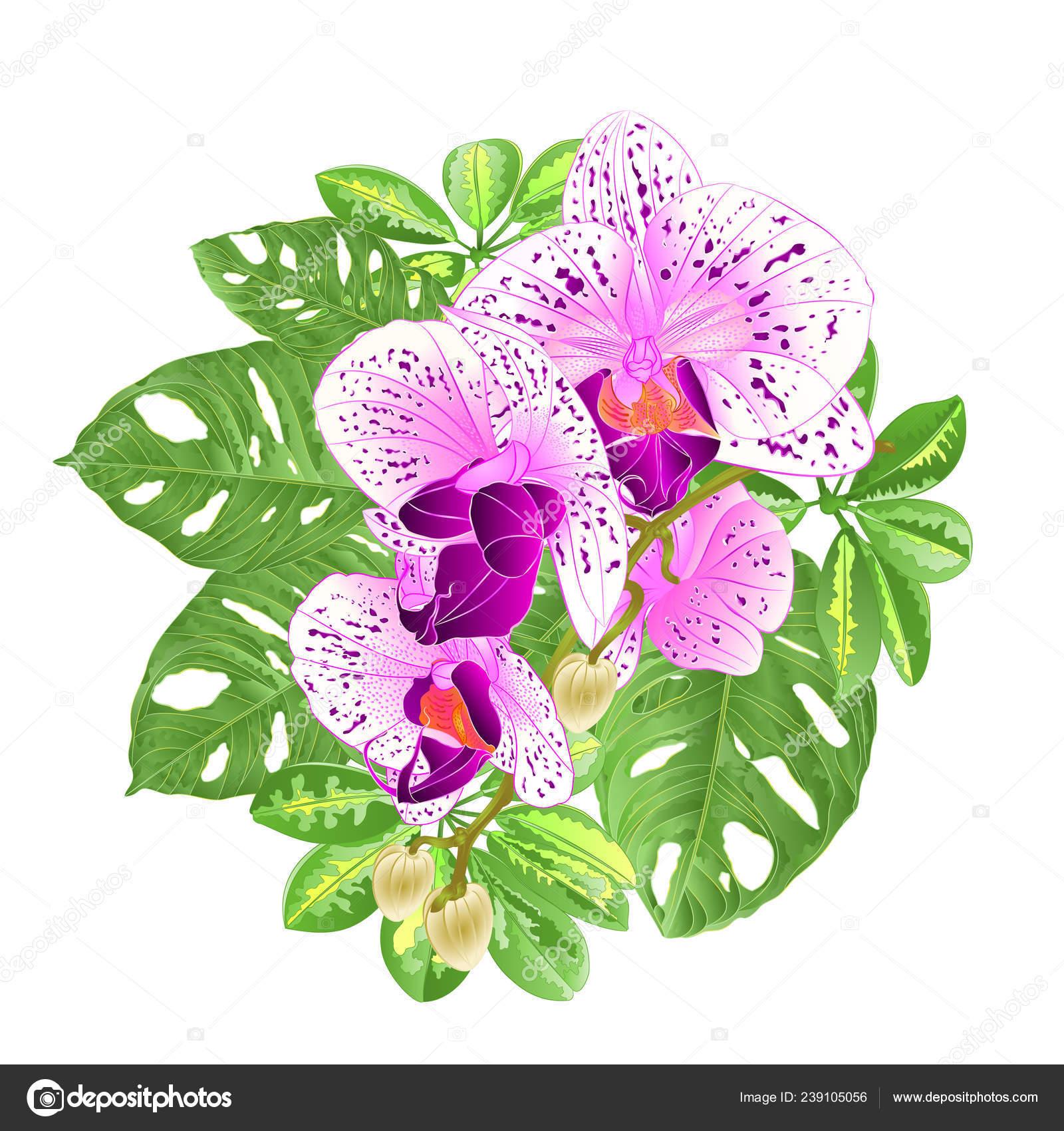 Ramo Tropical Flores Arreglo Floral Hermosa Orquídea