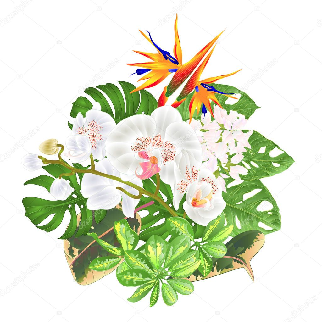 Bouquet With Tropical Flowers Floral Arrangement With Strelitzia And White Orchid Phalaenopsis Philodendron And Schefflera And Monstera Vintage Vector Illustration Editable Hand Draw Premium Vector In Adobe Illustrator Ai Ai