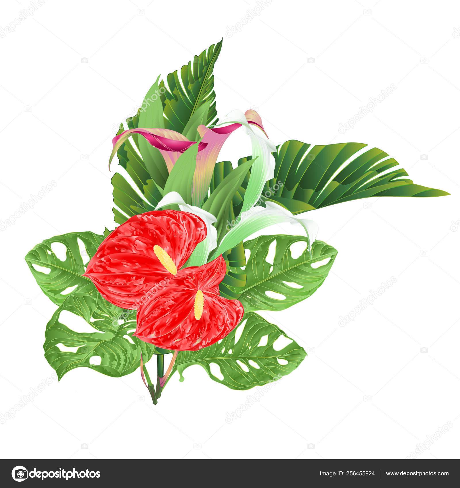 Ramo Con Flores Tropicales Arreglo Floral Con Hermosas