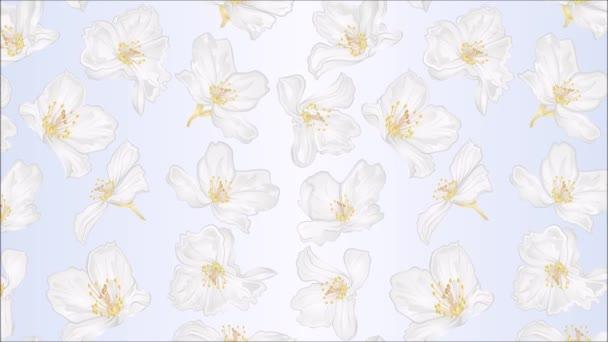 Videó zökkenőmentes hurok animáció illusztráció jázmin virágok ünnepi háttér vintage mozgás