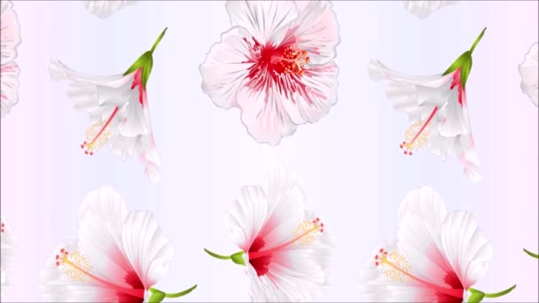Video seamless loop animation of illustration flowers white hibiscus festive background vintage motion