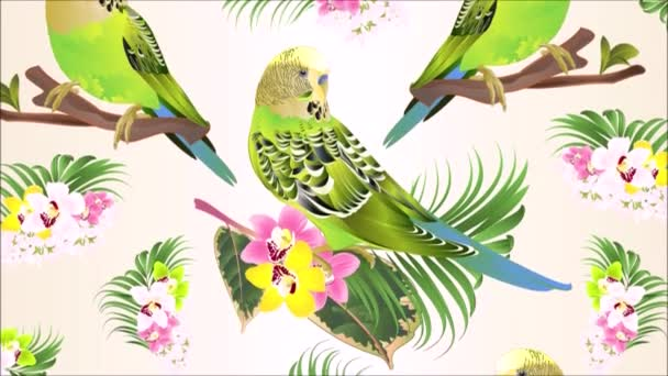 Videó zökkenőmentes hurkot animáció illusztráció zöld papagájok Budgerigars, házi kedvenc, kisállat papagáj vagy papagáj vagy shell papagáj orchidea cymbidium rózsaszín fehér és sárga tenyér ficus akvarell mozgás