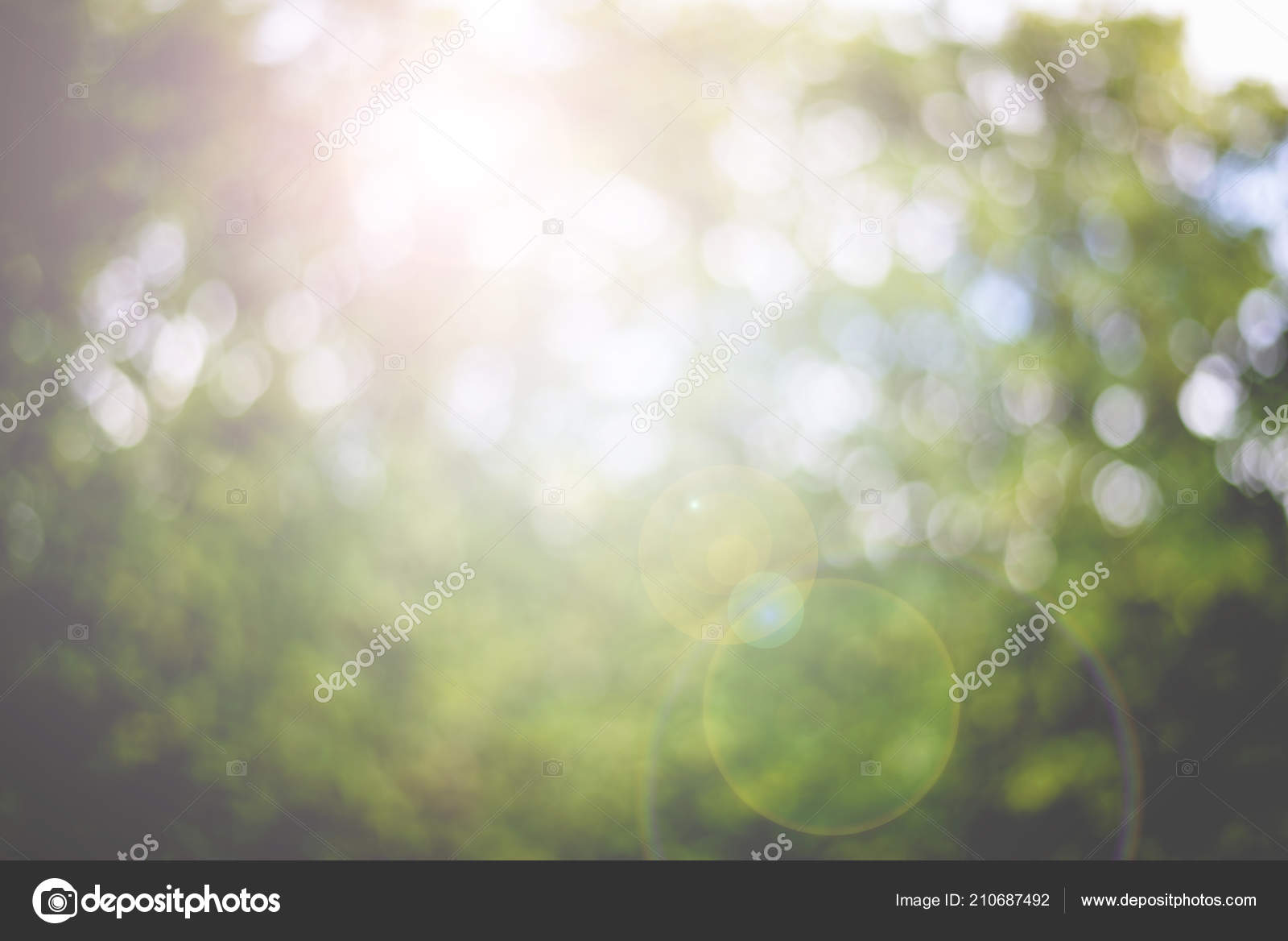 abstract nature blur background lens flare beauty bokeh green