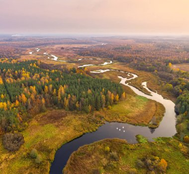 Aerial shot of autumn forest and river in natural reserve Sin'sha, Belarus stock vector