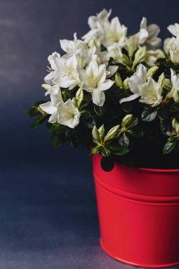 Hydrangea in vase on dark background in studio