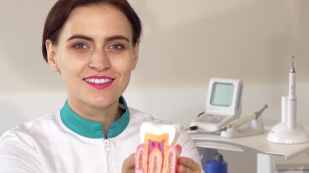 Dentista femminile allegro tenendo fuori modello sano del dente alla fotocamera. Modello: attraente dentista professionista mostrando dente sano. Odontoiatria, occupazione, concetto gengive sane