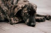 ein obdachloser zotteliger Hund wartet auf einen Eigensinn