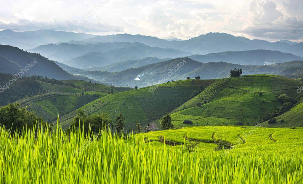 Greenery rice terraced field at Baan Pa Bong Piang village in Chiangmai,Thailand