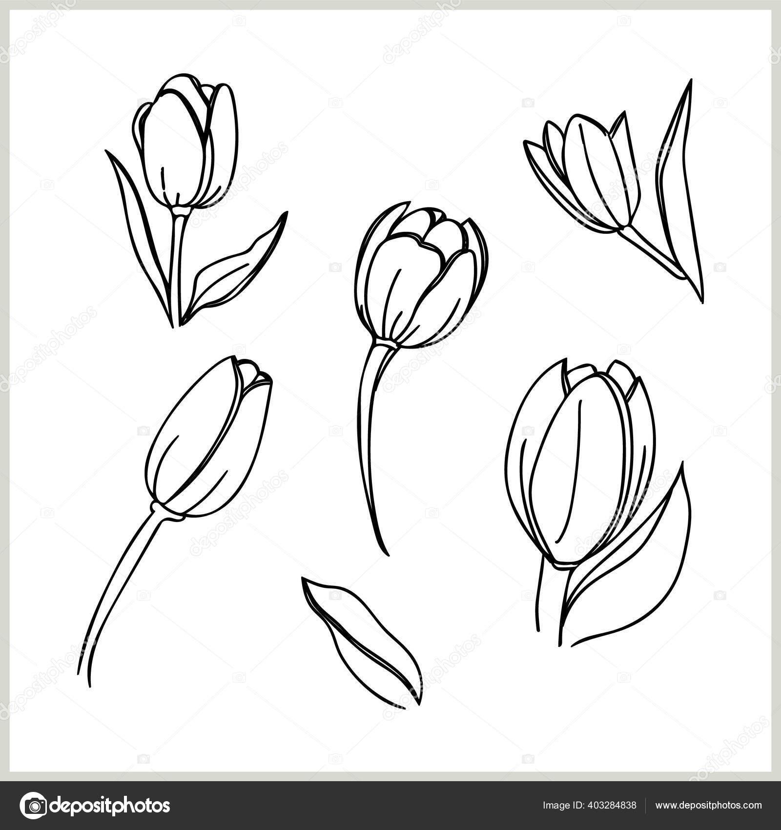 Tulip Grafis Hitam Dan Putih Vektor Stok Vektor C Svemar 403284838