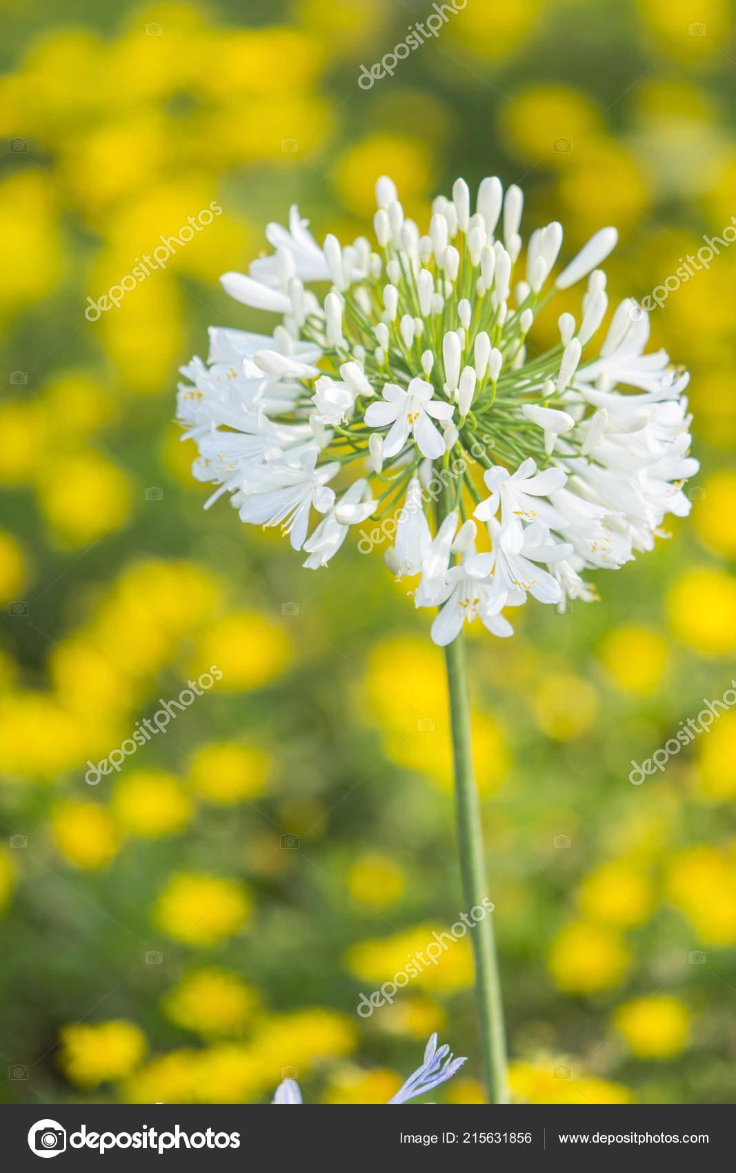 Beautiful Natural Flowers Blur Background Stock Photo C Camaralenta 215631856