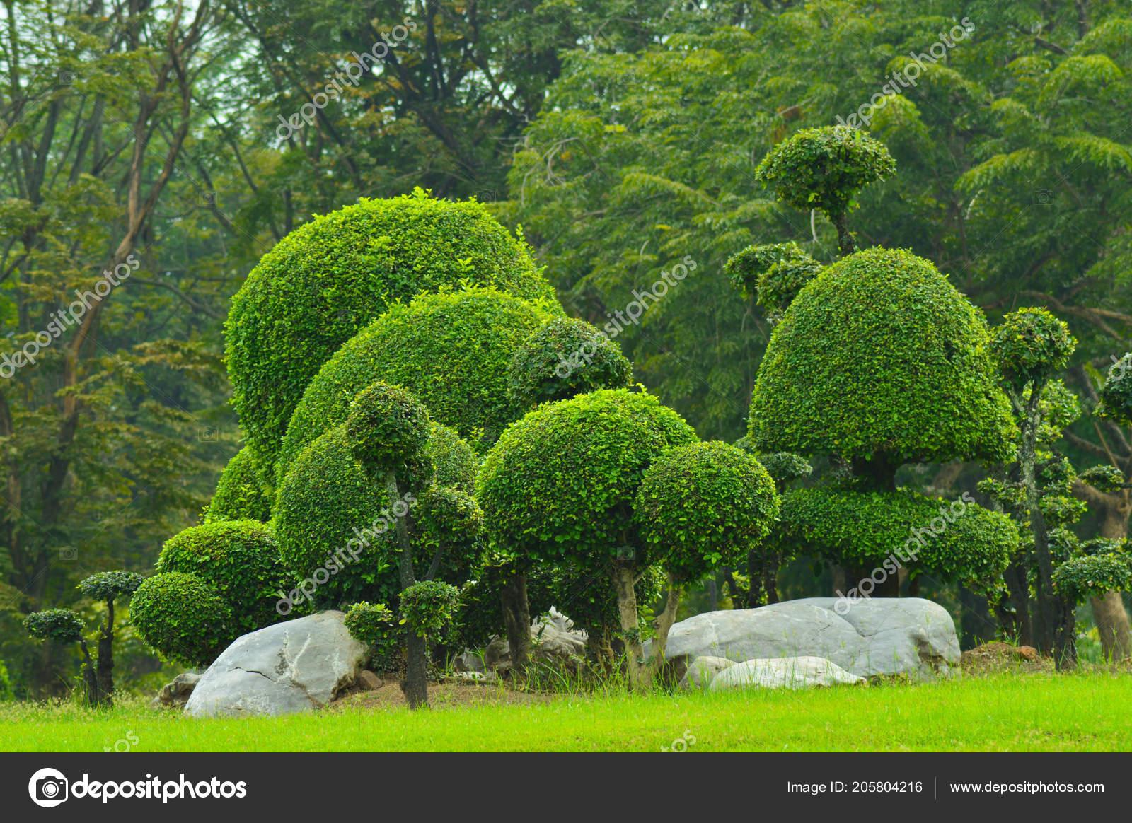 Arbre Dans Jardin Paysager Design Art Décoration — Photographie ...