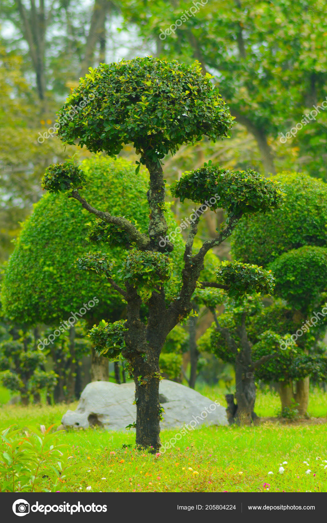 Arbre Dans Jardin Paysager Design Art Décoration ...