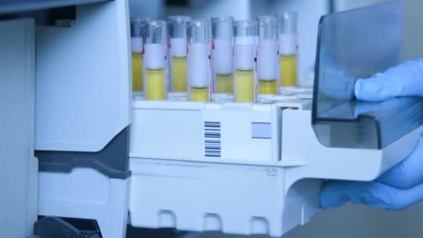A scientist in a laboratory places test tubes with blood or urine in the container of a thermal analyzer