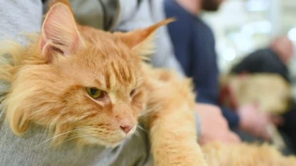 Menschen mit Haustieren warten auf ärztliche Untersuchung