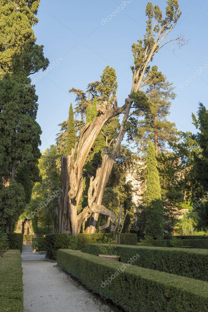 Tree on Villa D'este on a summer day. The landmark of the city of Tivoli in Italy.